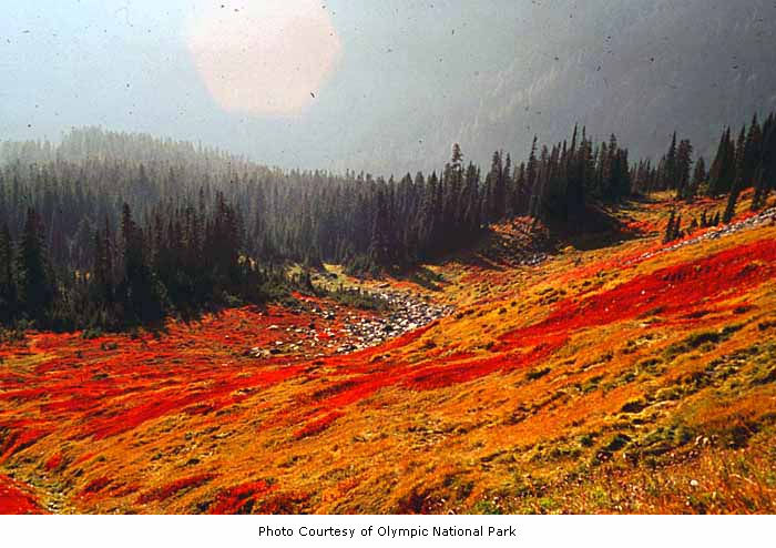 fall-meadow-in-olympic-national-park-photo-courtesy-of-olympic-national-park