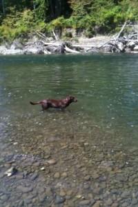 Halle swims the Bogie!