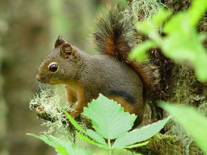 douglass_squirrel