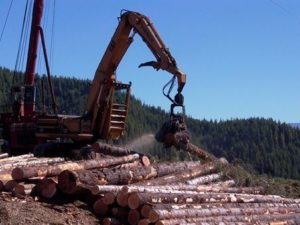 logging and mill tour photo