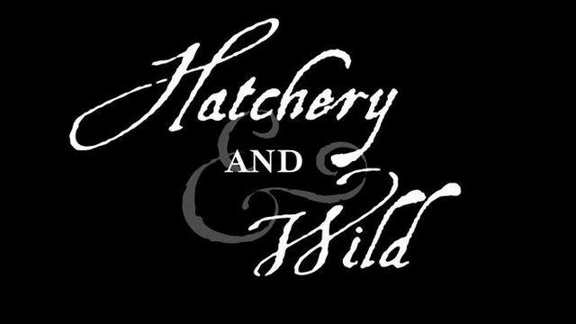 Hatchery AND Wild