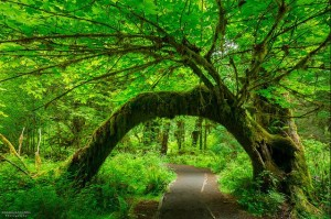 Free Entrance Days @ Olympic National Park