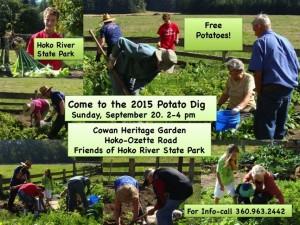 Potato Dig 2015