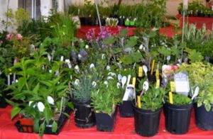 St. Anne Annual Luncheon, Rummage, Plant and Bake Sale @ St. Anne Church Social Hall | Forks | Washington | United States