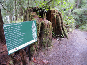 NOLS Poetry Walks @ Hall of Mosses Trail | Forks | Washington | United States