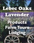 Lebec Oaks Lavender