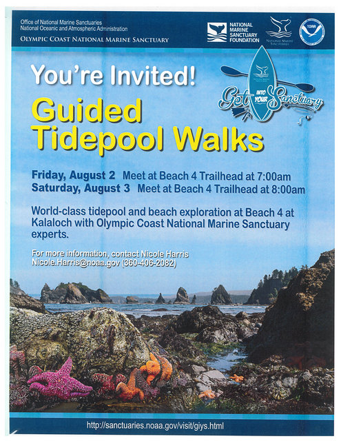 Guided Tidepool Walks @ Beach 4 Trailhead @ Kalaloch | United States